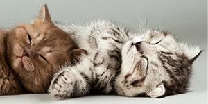 kitty_01
