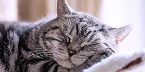 kitty_03
