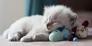 kitty_04